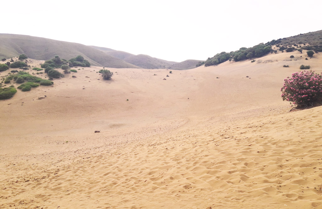 Ammothines (Sand dunes)